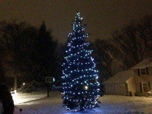 Christmas Lights in Albany, NY evergreen