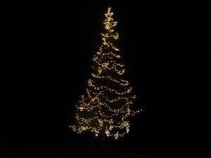 Christmas lights in Albany, NY 30 foot evergreen